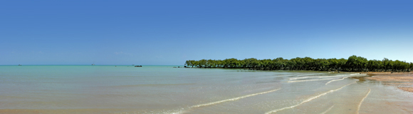 0223 - Mangroves at Town Beach, Broome, W.A.