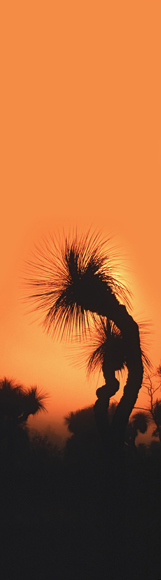 0028 - Grass Tree Sunrise, QLD