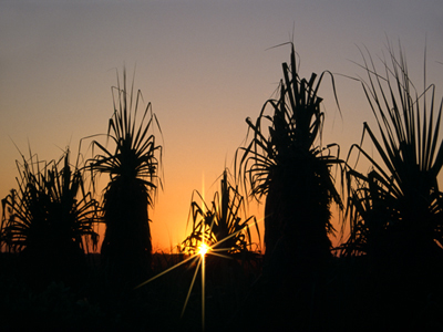 0180 - Pandanus Sunset, W.A.