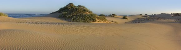 0272 - Sandripples, Cape Range, W.A.