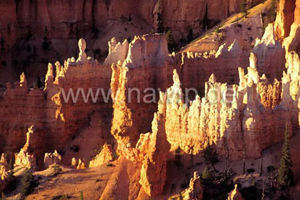 Bryce Canyon,  USA  / L_USA_48