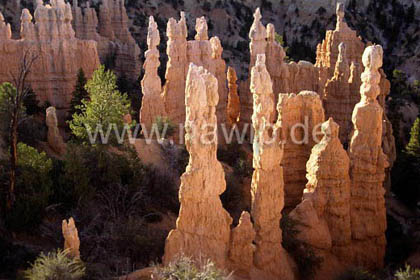 Bryce Canyon, USA / L_USA_49