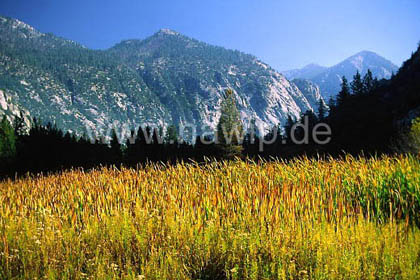 Zumwalt Meadow, Kings Canyon NP / L_USA_35